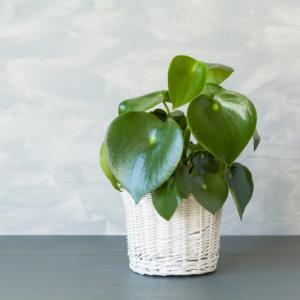 Empire Wholesale Indoor Foliage